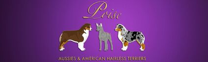 Poise Aussies & American Hairless Terriers